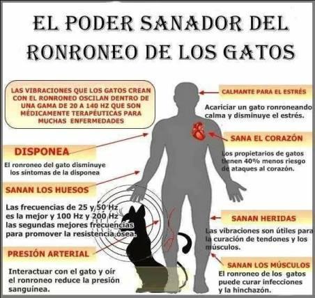 cartel-p-terapeuticas-rnroneo-gato